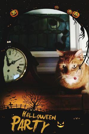 Cat♡ Caturday! Haloween Evil Cat