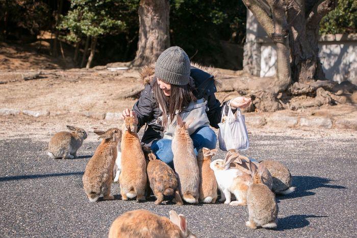 Ōkunoshima (大久野島) Hiroshima Prefecture, Japan Wildlife Animal Feeding Okunoshima Rabbits Travel Photography Travel Destinations Travel Okunoshima Japan Hiroshima