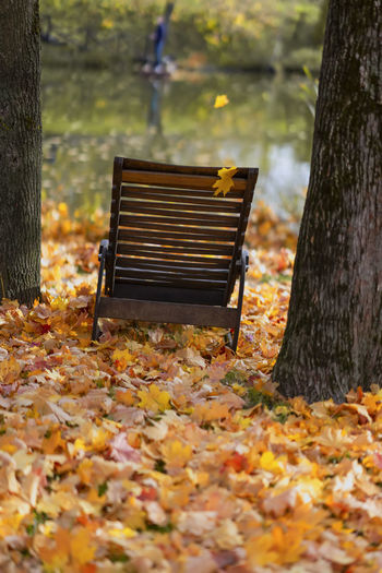 Old wooden chaise longue among fallen autumn leaves on the shore near the water. Atmospheric landscape, Autumn, fall season, sad, loneliness, real scene, seasonal mood concept Tree Bench Nature Autumn Plant Seat Day Park Leaf Outdoors Land Leaves Change Tree Trunk No People Atmospheric Mood Candid Autumn Fall Fallen Season  Sad Loniless Chair Beach