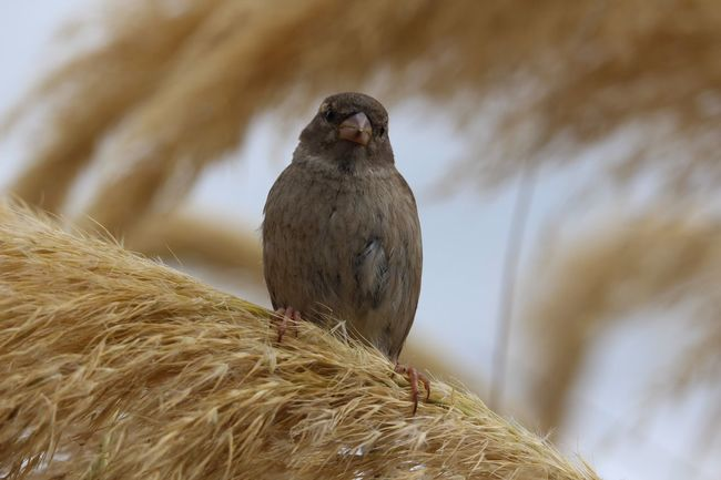 Sparrow Birds Animal Themes Animals In The Wild One Animal Bird Animal Wildlife Focus On Foreground Close-up Nature Perching No People Day Outdoors Bird Of Prey Mammal Nest Building Beak Nature Low Angle View Animals In The Wild Feathers
