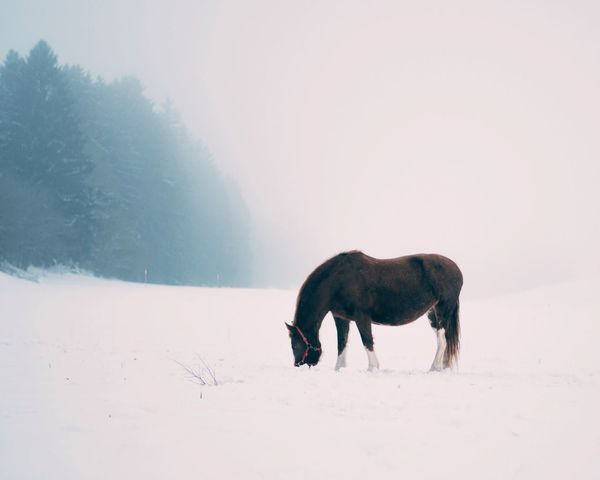 Snow Winter Weather Animal Themes Nature Cold Temperature Field Beauty In Nature No People Day Landscape Outdoors Sky Mist Fog Horse Minimalism Simplicity Switzerland Animals