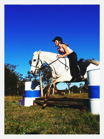Azzys first time jumping? Azzy Arabian Horse Jumping Best Horse