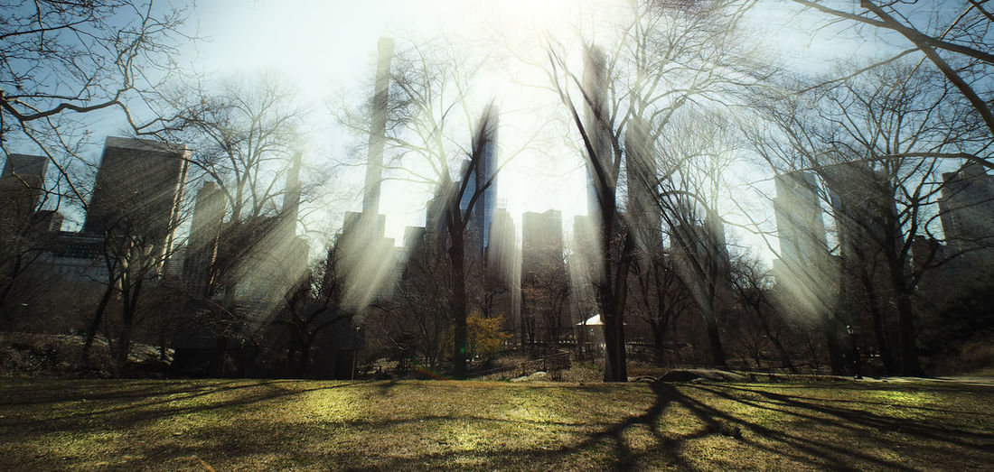 OLYMPUS DIGITAL CAMERA Tree Bare Tree Sunlight Park Shadow Tranquil Scene Trunk Tranquility Cityscape cityscapes Urban Landscape Urbanphotography NYC Photography Central Park - NYC Sunlight