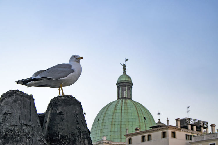 Birds perching on temple against sky