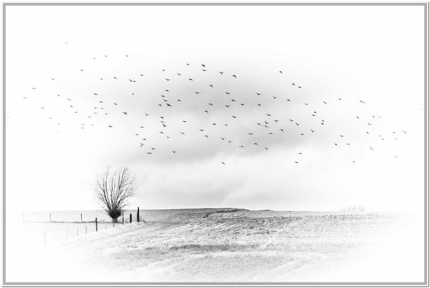 Cloudy Sky Leefdal Animals In The Wild Beauty In Nature Flock Of Birds Flying Landscape Nature Outdoors Sky
