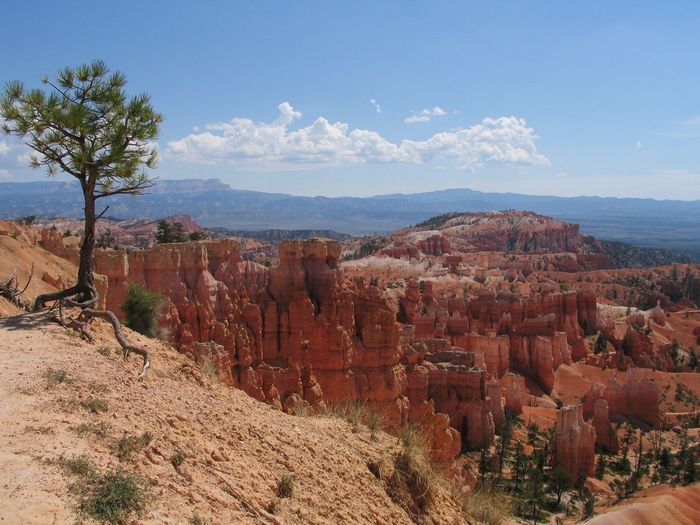 Brice Canyon Geology Beauty In Nature Landscape Nature Rock Formation tree Sky Day