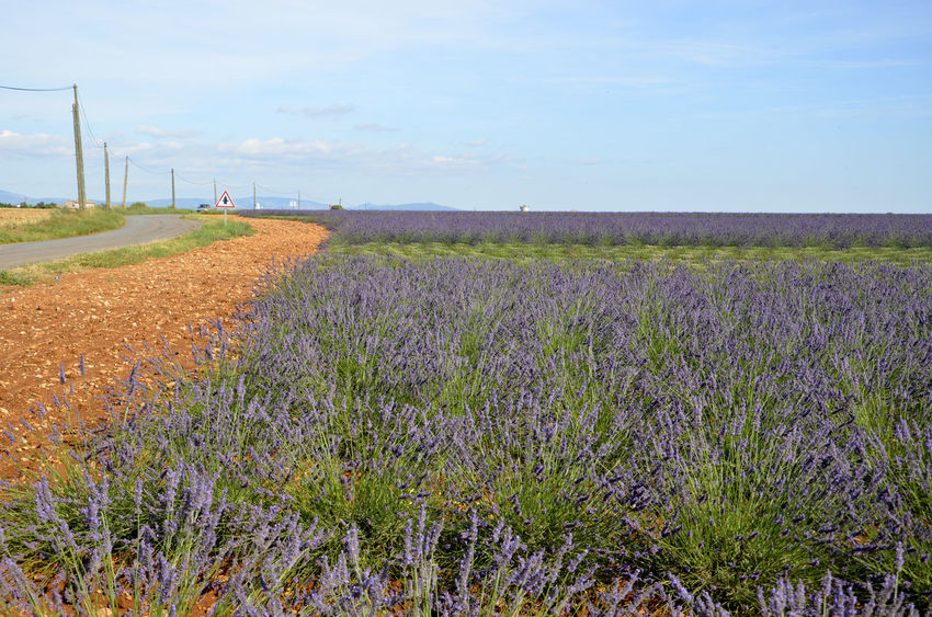Agriculture Beauty In Nature Campo Cielo Y Nubes  Colori Colors Colours Field Fiori Flowers France Freshness Landscape Lanvanda Field Lavanda Lavander Nature Nature Panorama Provence Provenza Scenics Sky Your Ticket To Europe Mix Yourself A Good Time
