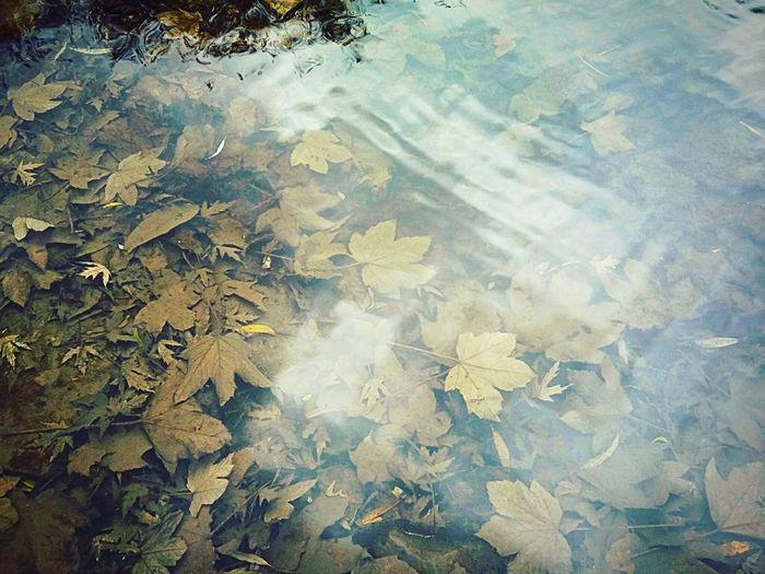 Autumn Pond Park Leaf Ternopil Samsung Galaxy A3 EyeEm Nature Lover EyeEm Best Shots River Lake Nature EyeEm Ukraine