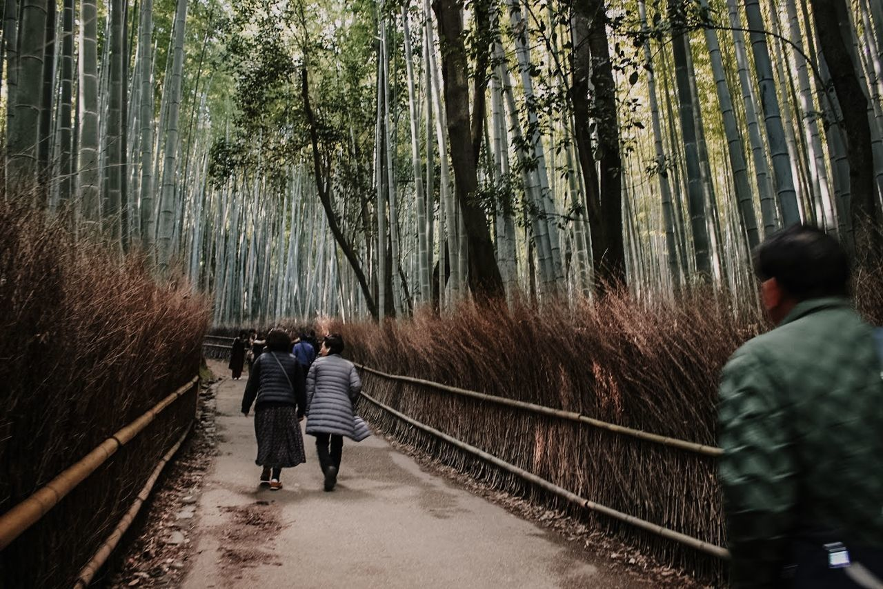 REAR VIEW OF PEOPLE WALKING ON WALKWAY AMIDST TREES IN FOREST