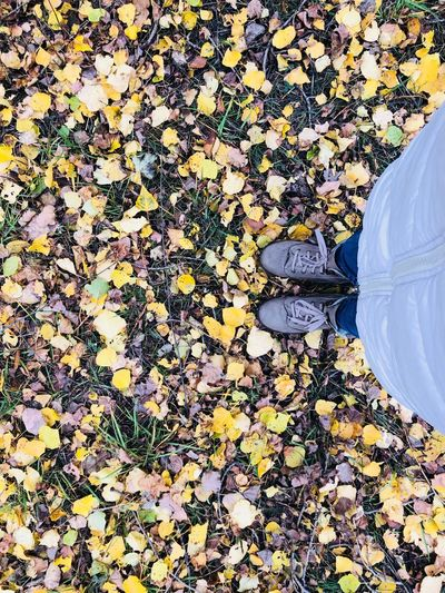 Low section of person standing on yellow autumn leaves