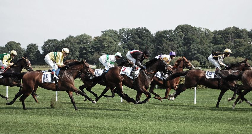 Horse Racing Horse Competition Jockey Domestic Animals Real People Sports Race Sports Track Tree Running Competitive Sport Horseback Riding Mammal Field Gambling Speed Men Outdoors Riding Medium Group Of People Iffezheim Turf Sports Iffezheim Baden-Baden