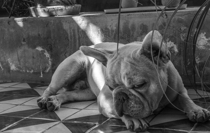 Dog style Dog Sleeping  Dogoftheday Dogs_of_instagram Dogmodel Dog Dog Photography Doggy Dogstagram Doglover Dogs Of EyeEm Dog Love Pets Animal Themes Domestic Animals Mammal Dog One Animal Relaxation Day Close-up No People Indoors  Sleeping Lying Down EyeEm Ready