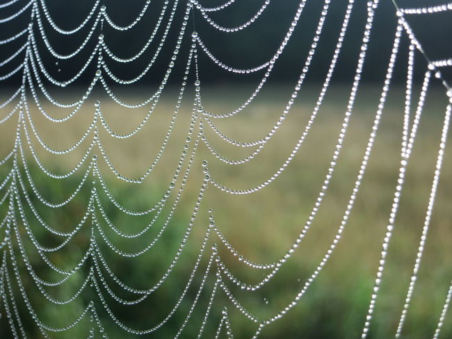 Spider's Web Beauty In Nature Close-up Focus On Foreground Fragility Freshness Light Effects Morning Dew No People Pearls Of Water Spider Web Spider Web With Morning Dew Spiderweb With Drops