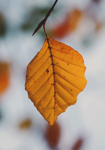 beautiful brown tree leaves in the nature Leaf Leaves Brown Nature Beauty In Nature Beautiful Tree Leaves Branch Branches Color Colorful Fragility Fragile