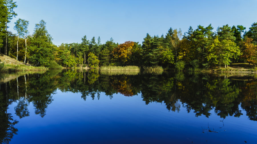 Autumn Reflection Amersfoort Autumn Autumn Colors Netherlands Beauty In Nature Blue Clear Sky Day Forest Growth Lake Nature No People Outdoors Reflection Scenics Sky Standing Water Tranquil Scene Tranquility Tree Utrecht Water