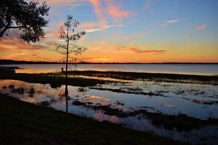 Clermont, Florida sunset Florida Sunset Sunset Photography Sunset Silhouettes Sunset On The Water Beauty In Nature Cloud - Sky Day Lake Lake Sunset Nature No People Outdoors Reflection Scenics Silhouette Sky Sunset Sunset On Water Tranquil Scene Tranquility Travel Destinations Tree Tree Silhouette Tree Sunset Water