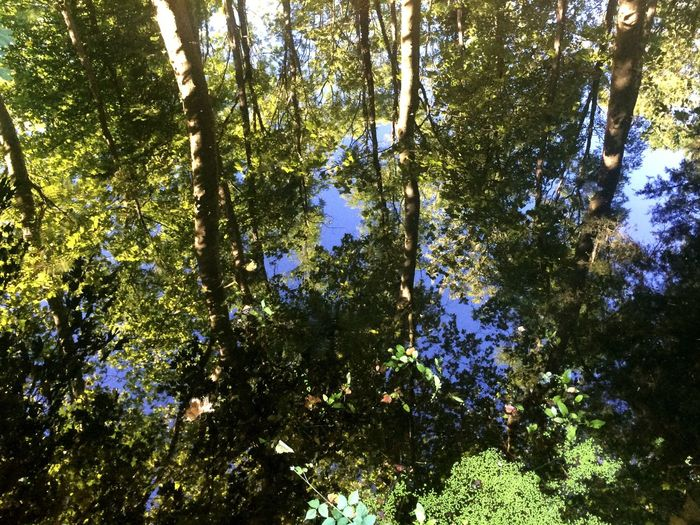 Envers Reflet Réflexion Back Nature Water Eau