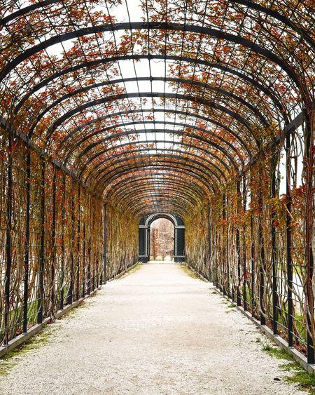 Orange tunnel Garden Tunnel Plant Trees Shönbrunn Vienna Wien Österreich Austria Arch Architecture Pathway Arched Woods Visual Creativity