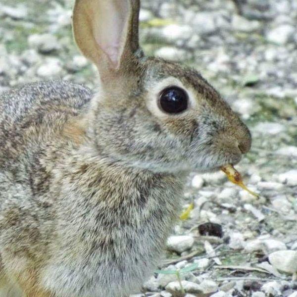 San Antonio Texas Comanche Park Rabbit 🐇 Nature Photography