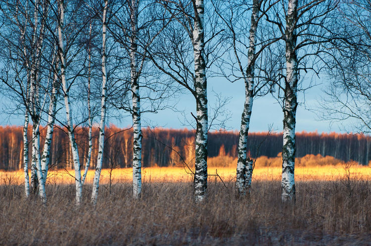 Cold sunset Branches Estonia Fine Art Photography Shadows & Lights Wall Art Beauty In Nature Cold Cold Temperature Europe Forest Golden Hour Grassland Nature No People Outdoors Shaddow Sunset Tree Winter