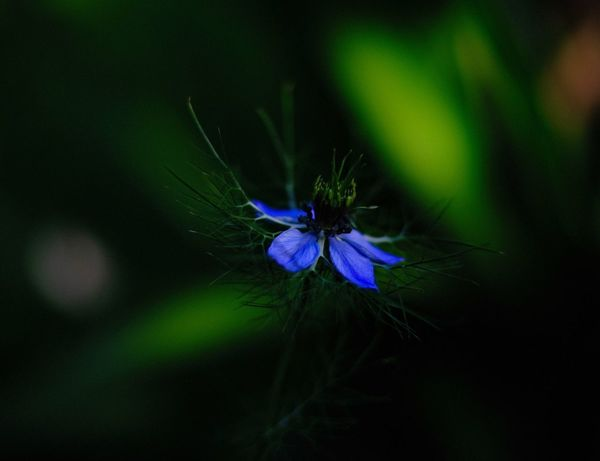 Flower Flowering Plant Fragility Vulnerability  Plant Freshness Beauty In Nature Flower Head Selective Focus Nature Green Color Petal Outdoors Softness Close-up