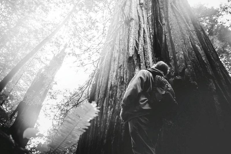 Low angle view of man looking at tall tree in forest