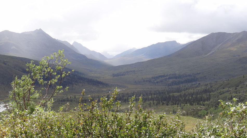 Beauty In Nature Canada Day Dempster Highway Landscape Mountain Nature No People Outdoors Plant Scenery Sky Tombstone Territorial Park Vegetation Wilderness Yukon