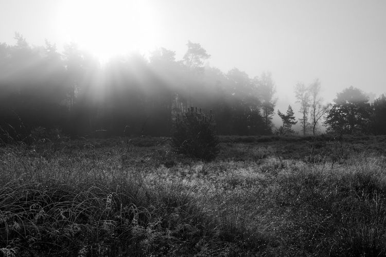 Celebrating the morning in the forests of The Veluwe, The Netherlands - The morning sunlight shining on the heath Black And White Blackandwhite Blackandwhite Photography Forest Forest Photography Forestwalk Light Light And Shadow Morning Morning Light Nature Nature Photography Nature_collection Naturelovers Sun Sunlight Tree Trees