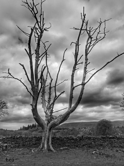 Tree Porn Spooky Trees Black And White Dead Tree