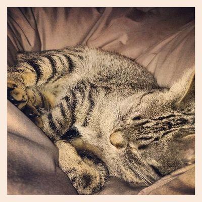 Itzi!!!! Igerscats Igersanimals Firstof2014 Theyearofthecat XperiaZ1 yesterdaynight