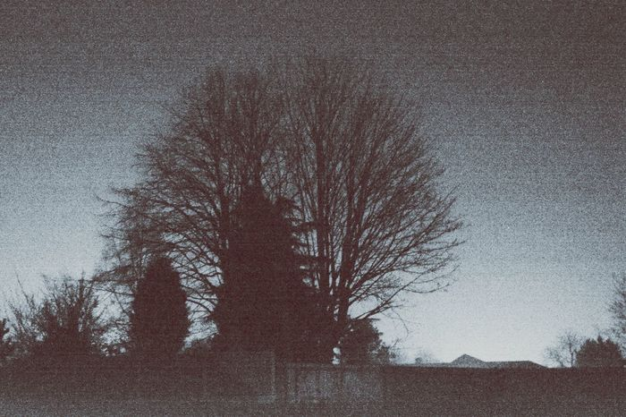 Night Vision Tree_collection  Tree And Sky Backyard Garden Black And White Photography Shadows My Gallery The Fine Art Photography