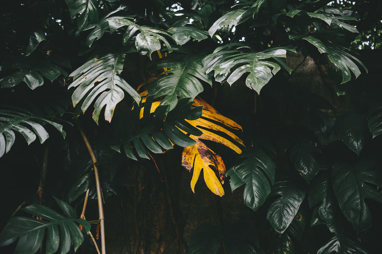 Paint The Town Yellow Beauty In Nature Close-up Day Growth Leaf Nature No People Outdoors Tree