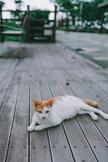 High angle view of cat resting on footpath