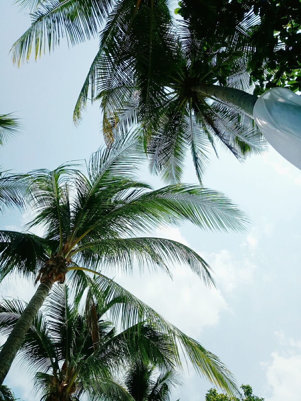 palm tree, tree, low angle view, green, sky, nature, growth, no people, leaf, day, beauty in nature, outdoors