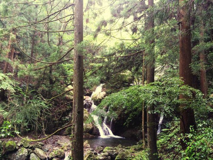 Tokushima_Japan Fall 雨乞いの滝
