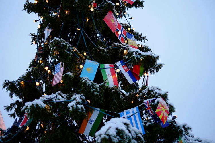 Christmas Tree Country Flag Country Flags Flags Photography Pine Tree
