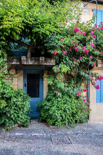 Beynac-et-Cazenac France Plant Architecture Growth Built Structure Building Exterior Nature Flowering Plant Flower No People Day Green Color House Building Entrance Residential District
