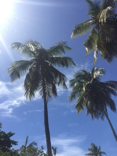 Palm Tree Tree Low Angle View Tree Trunk Sky Scenics Nature