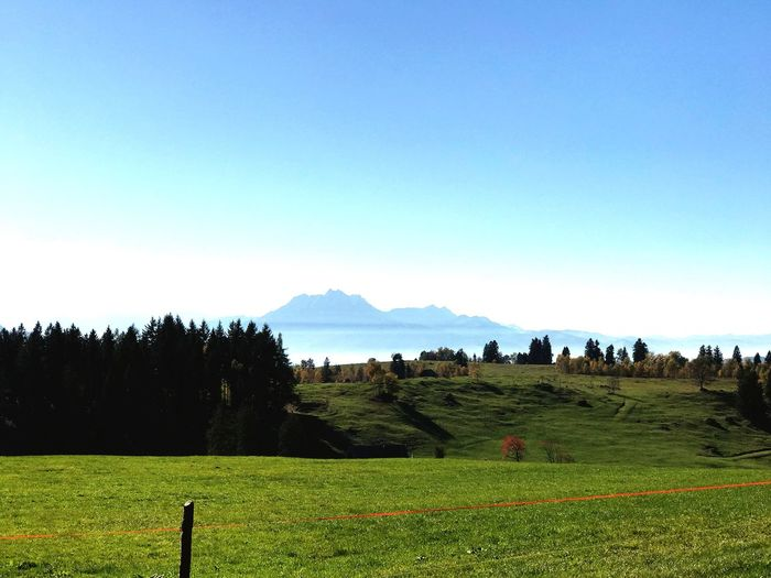 Floating mountains Field Landscape Tranquility Tranquil Scene Agriculture Nature Scenics Beauty In Nature Grass Farm Mountain Rural Scene No People Tree Growth Clear Sky Outdoors Sky Day Blue Switzerland Zugerberg