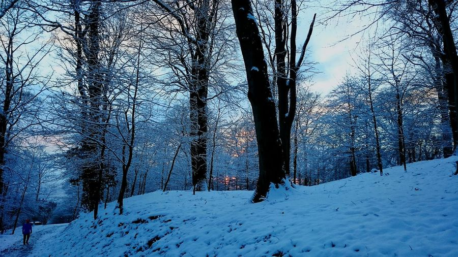 Heiligenberg Heidelberg Snow Snow ❄ Winter Sundown Contrast Beautiful Beautiful Nature Mood Gorgeous Nature Wonderful Forest Winterwonderland Landscapes With WhiteWall