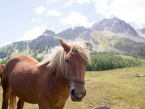 Horse Mountain Animal Themes Domestic Animals One Animal Mountain Range Mammal Livestock Day Nature Brown Field Outdoors Landscape No People Rural Scene Grass Sky Beauty In Nature Tree