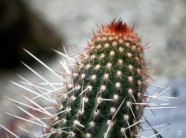 spiny! Cactus Thorny Devil Eye4photography  EyeEm Best Shots - Macro / Up Close