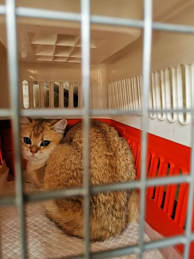 Close-up of cat in cage