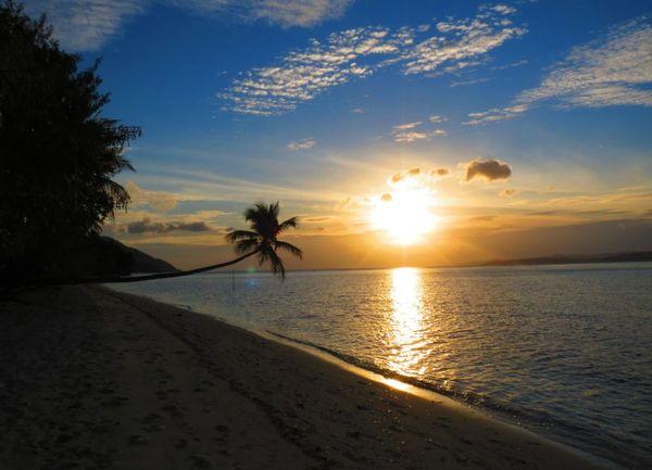 Tree Water Palm Tree Sea Swimming Sunset Beach Sand Dune Beauty Sand