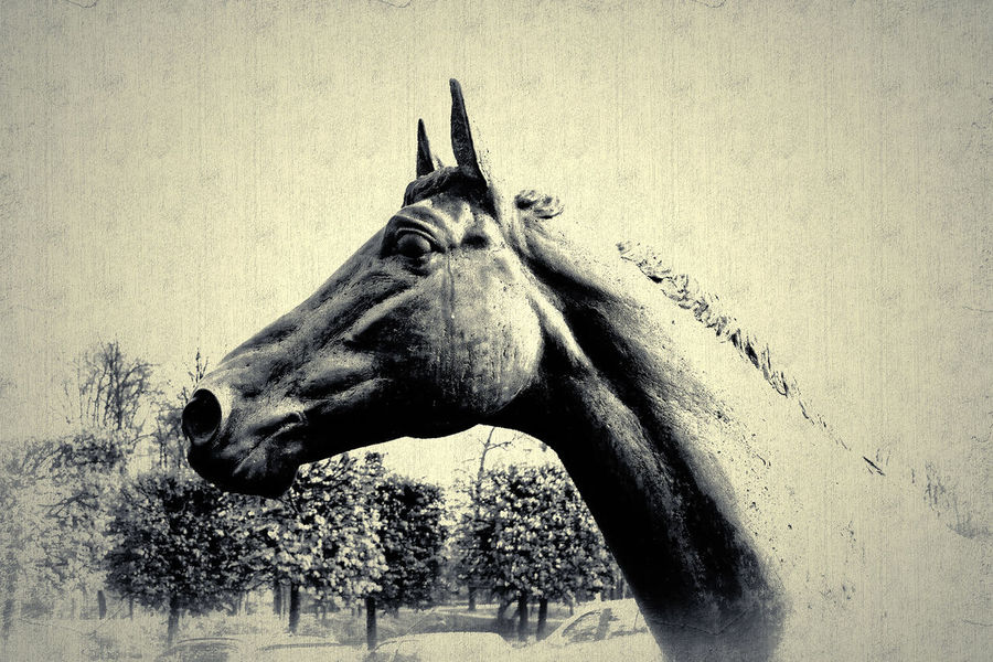 Statue Animal Head  Animal Themes Caballo Horse One Animal Paard Pferd Side View Wildlife
