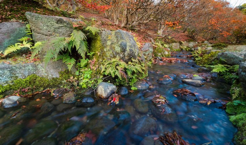 Water Nature Rock - Object Beauty In Nature Outdoors Day No People Scenics Green Color Stream - Flowing Water Close-up Japan Garden