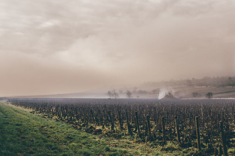 Scenic view of vineyard against cloudy sky