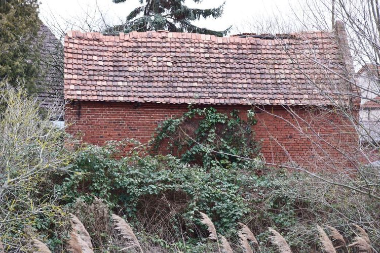 Built Structure Architecture Building Exterior Plant House Building Roof Nature Day Tree No People Growth Outdoors Brick Wall Ivy Roof Tile Old Brick Abandoned Deterioration Damaged Brick Building Rural Village Hidden
