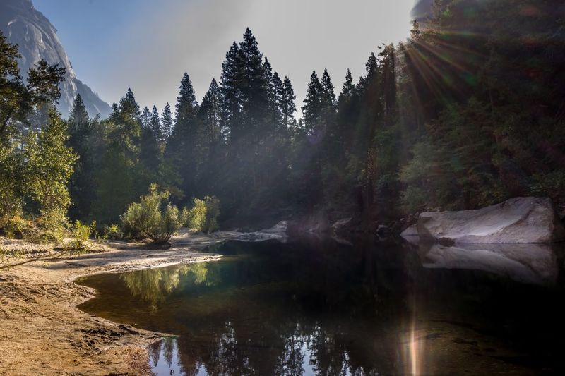 Lens Flare Sun Beams Reflection USA National Park California Travel Destinations Yosemite Valley Yosemite Yosemite National Park Tree Nature Beauty In Nature Scenics Tranquil Scene Tranquility No People Water Outdoors Mountain Forest Growth Landscape