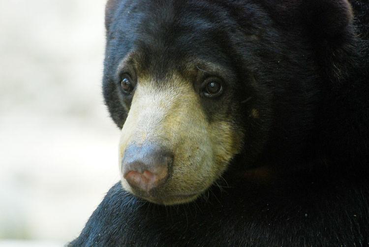 Sad Bear One